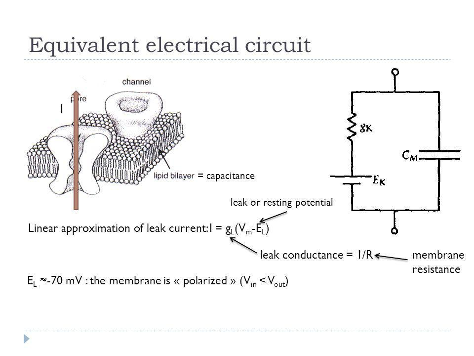 Equivalent electrical circuit