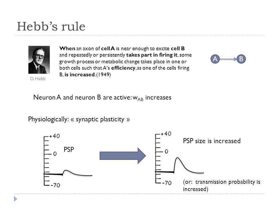 Hebb's rule A B Neuron A and neuron B are active: wAB increases