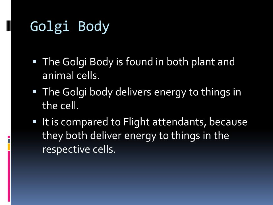 Golgi Body The Golgi Body is found in both plant and animal cells.