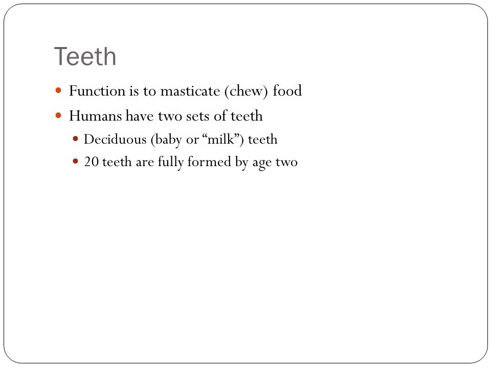 Teeth Function is to masticate (chew) food