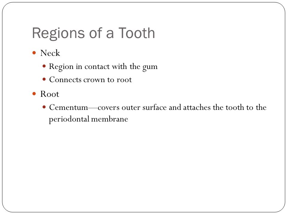 Regions of a Tooth Neck Root Region in contact with the gum