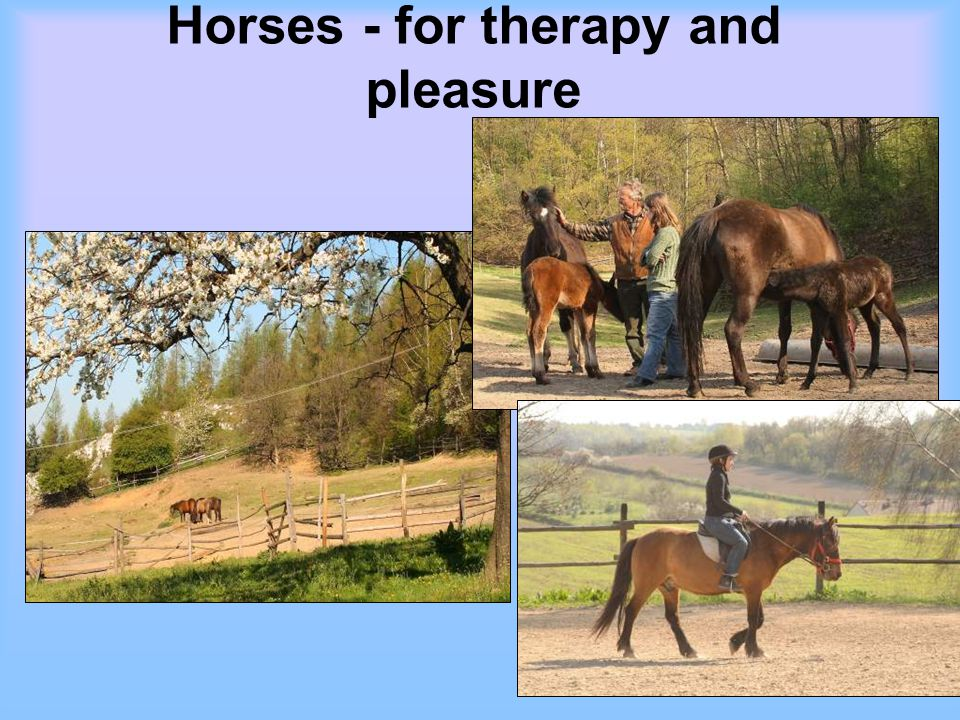 Horses - for therapy and pleasure