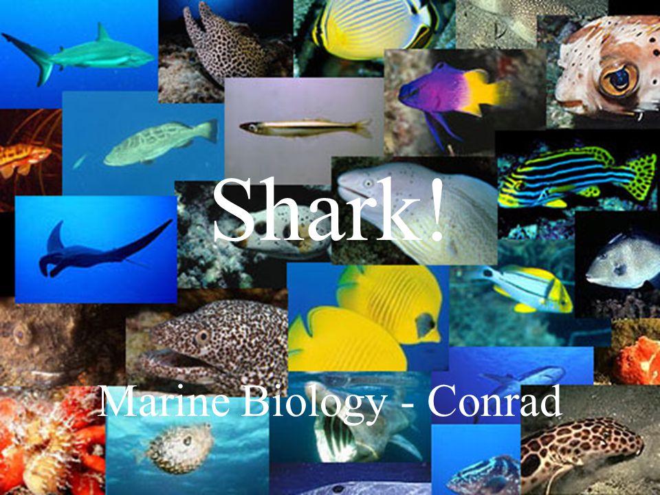 Marine Biology - Conrad