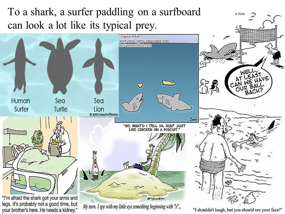 To a shark, a surfer paddling on a surfboard can look a lot like its typical prey.