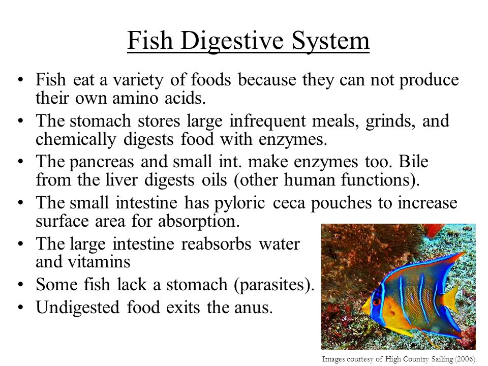Fish Digestive System Fish eat a variety of foods because they can not produce their own amino acids.