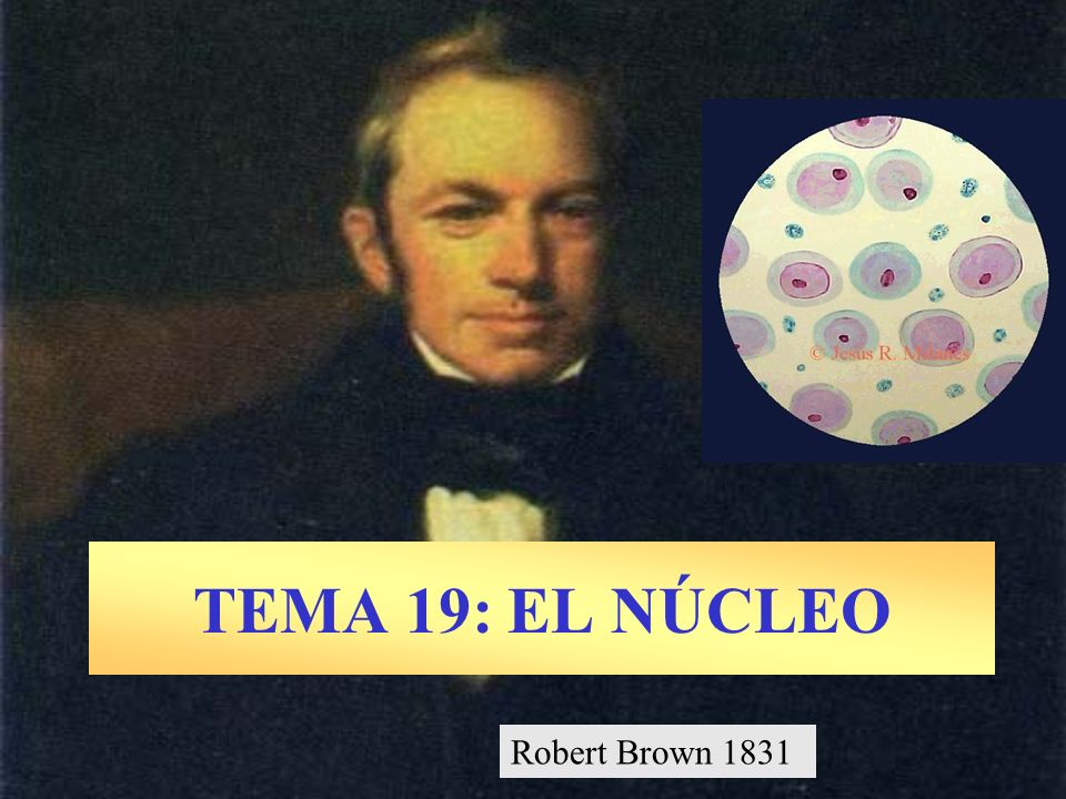 TEMA 19: EL NÚCLEO Robert Brown 1831