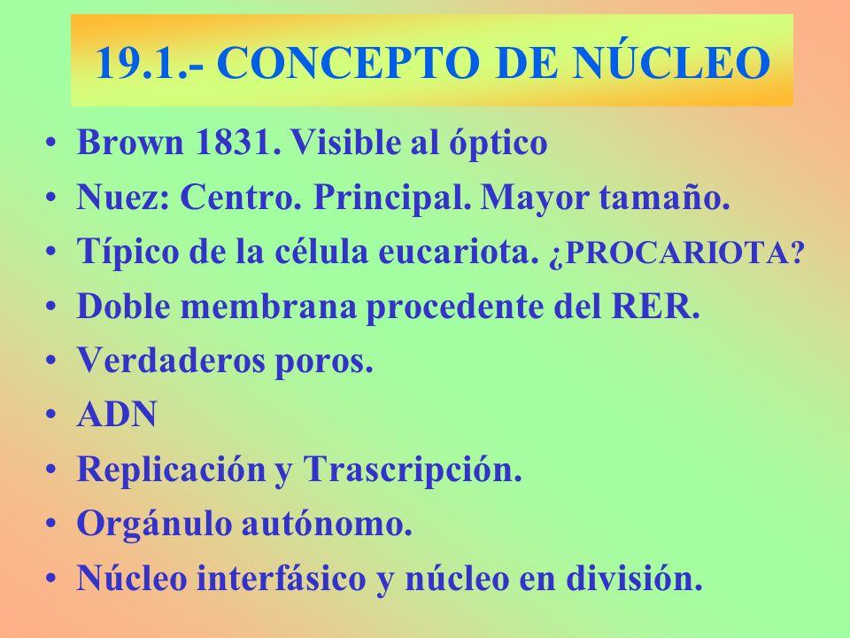 19.1.- CONCEPTO DE NÚCLEO Brown 1831. Visible al óptico