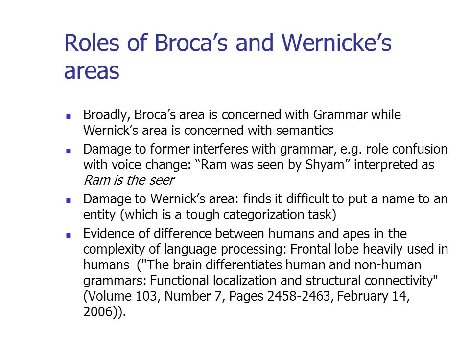 Roles of Broca's and Wernicke's areas