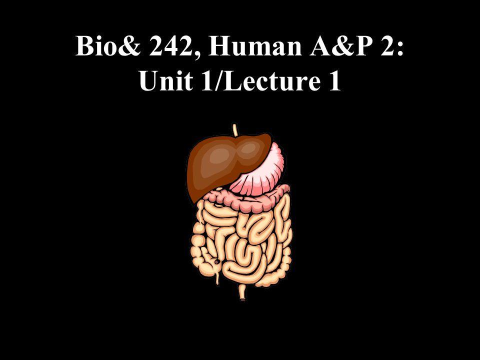 Bio& 242, Human A&P 2: Unit 1/Lecture 1