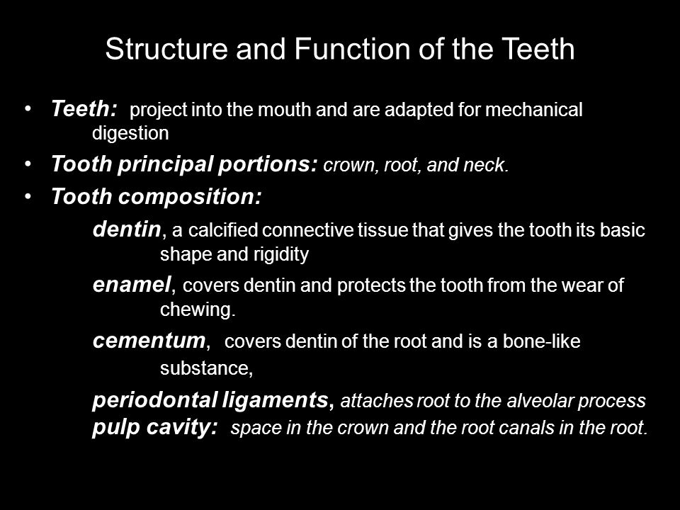 Structure and Function of the Teeth
