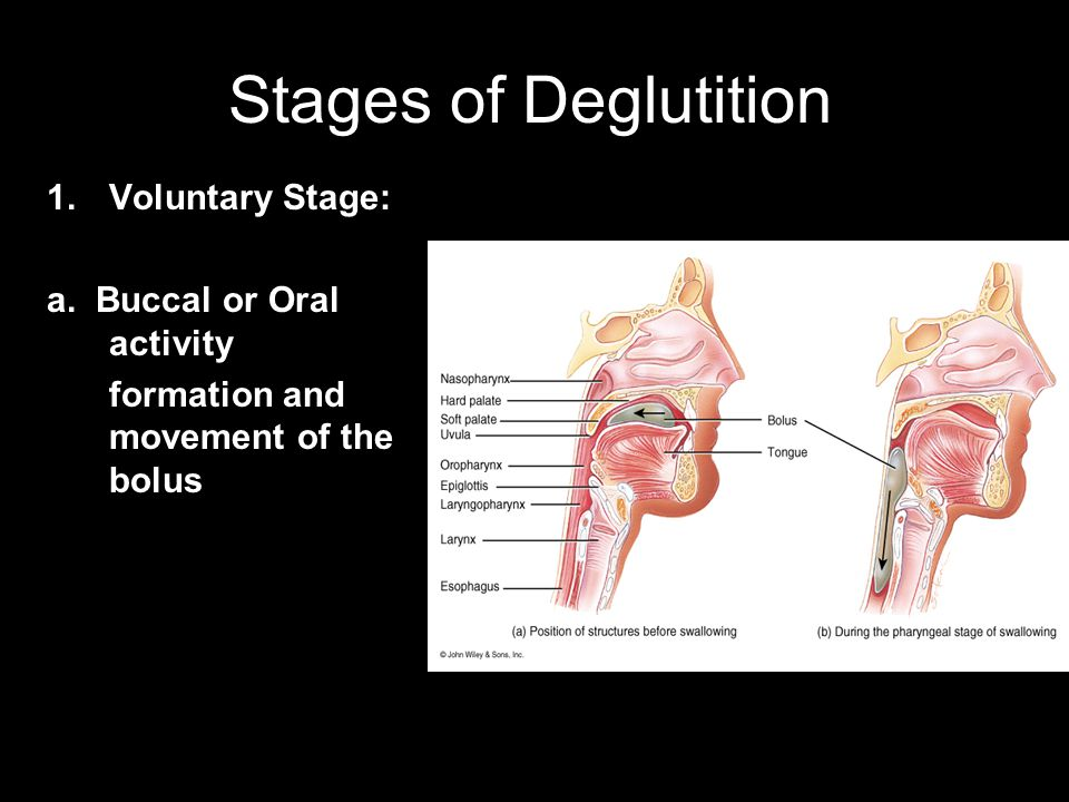 Stages of Deglutition Voluntary Stage: a. Buccal or Oral activity