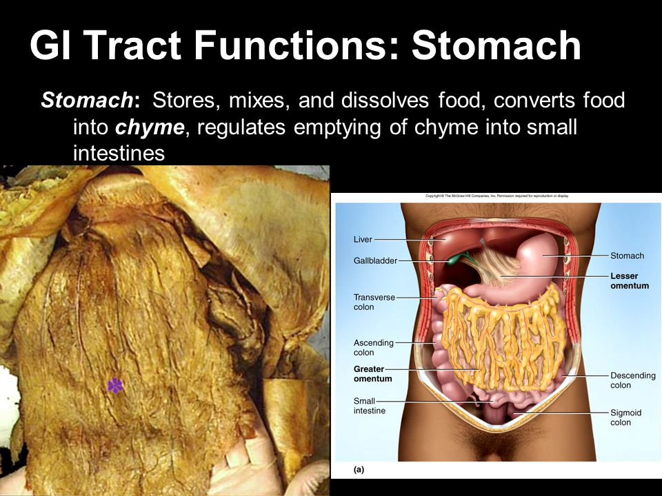 GI Tract Functions: Stomach
