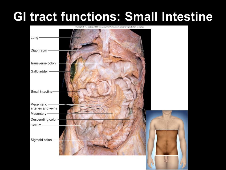 GI tract functions: Small Intestine
