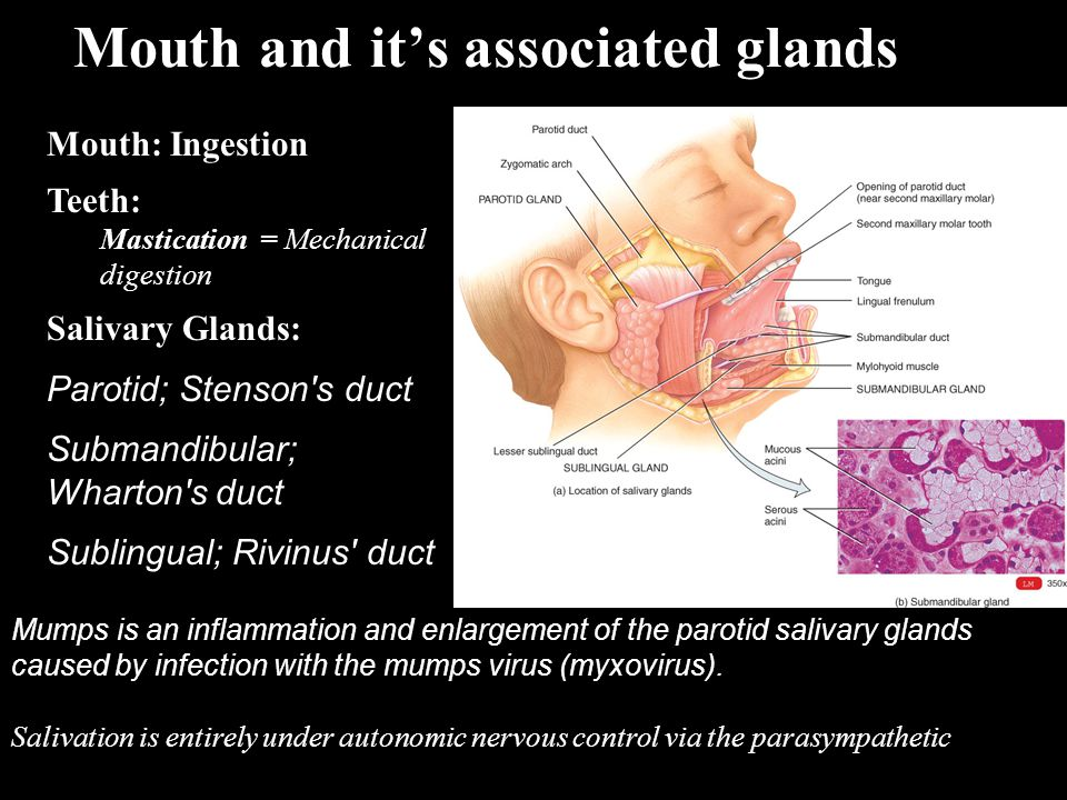 Mouth and it's associated glands