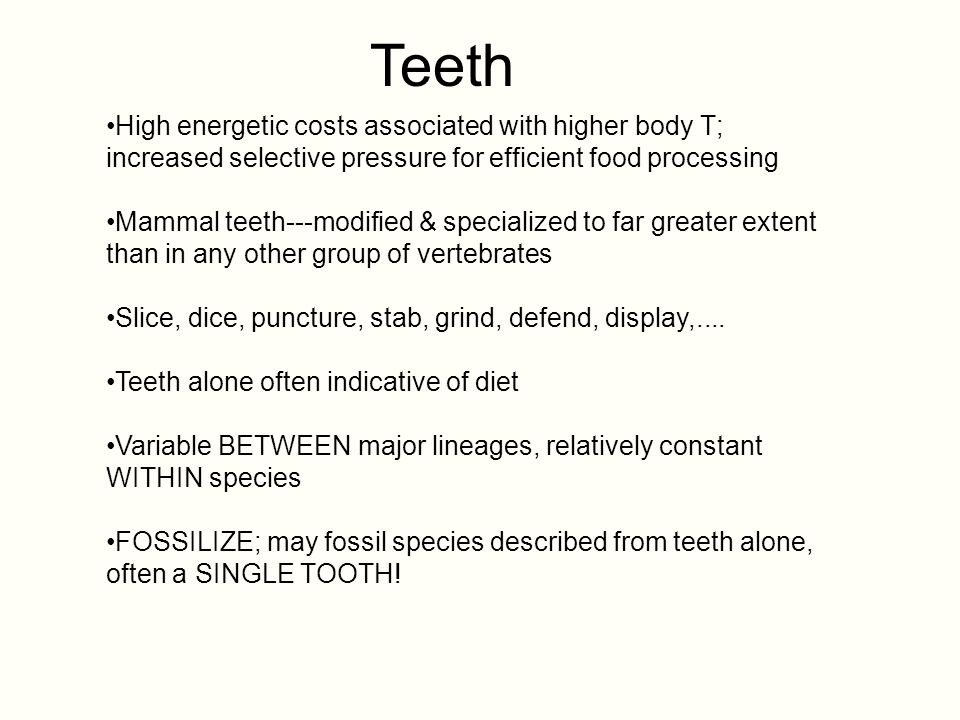 Teeth Finally, FOSSILIZE well; better than any other tissue type.