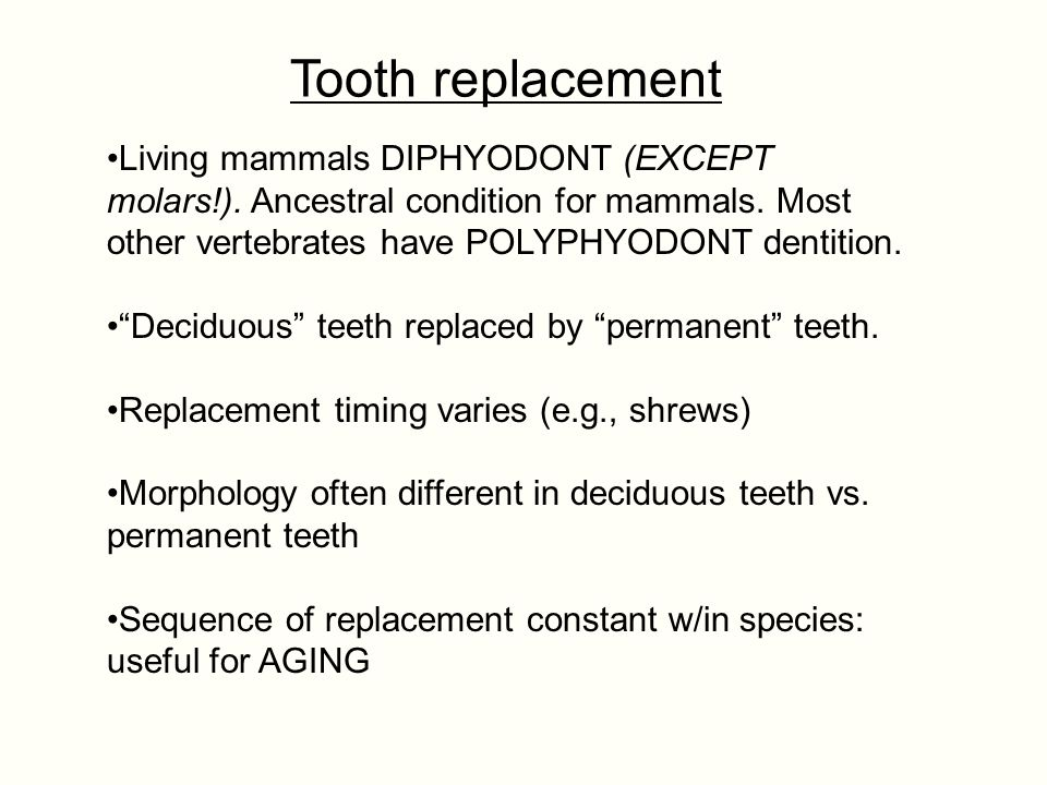 Tooth replacement MOST mammals (we're an exception) are BORN with milk teeth.
