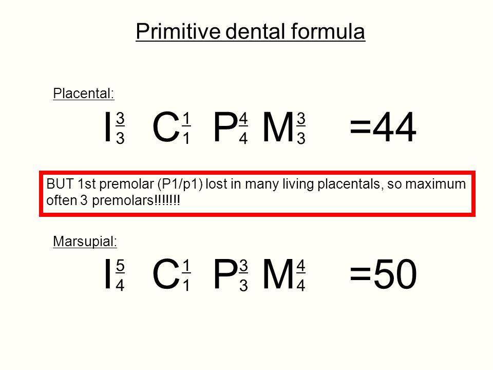 I C P M =44 I C P M =50 Primitive dental formula 3 1 4 3 5 4 1 3 4