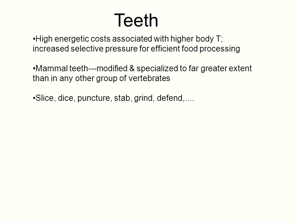 Teeth High energetic costs associated with higher body T; increased selective pressure for efficient food processing.