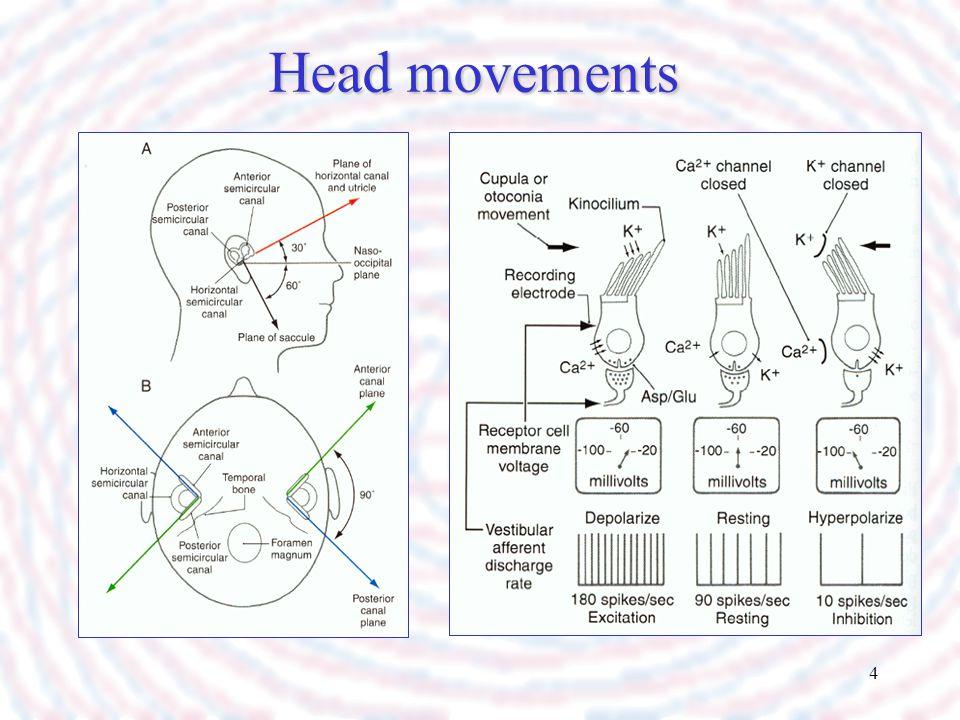 Head movements