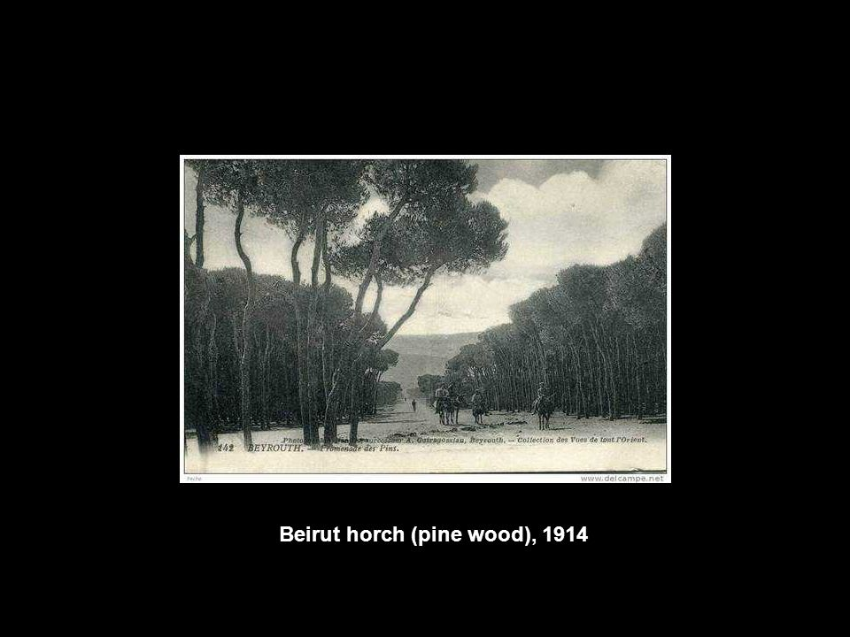 Beirut horch (pine wood), 1914