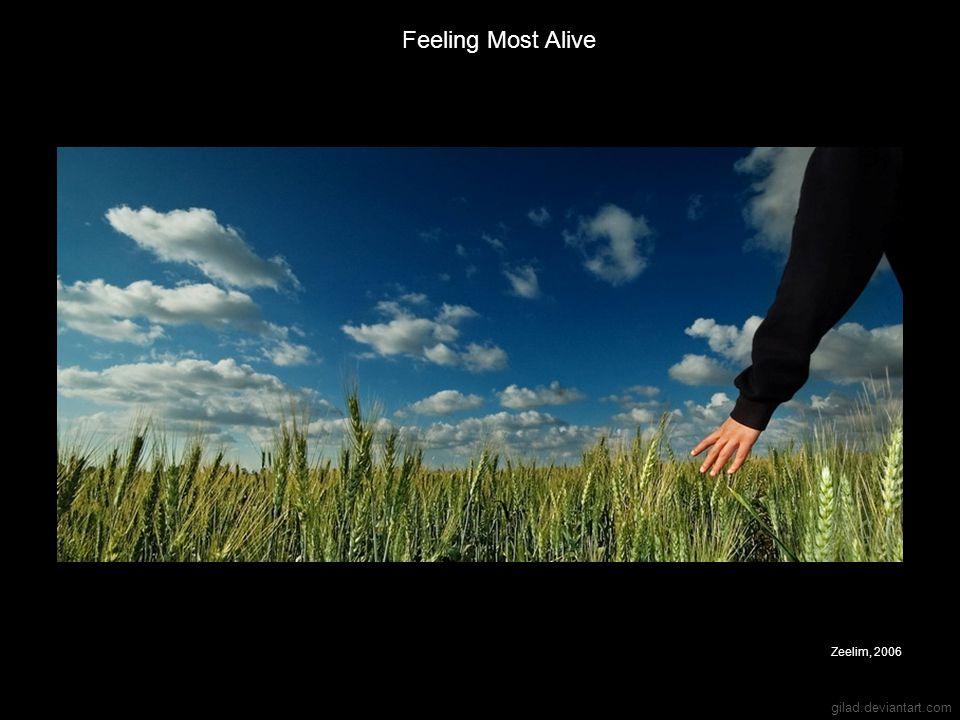Feeling Most Alive Zeelim, 2006 gilad.deviantart.com