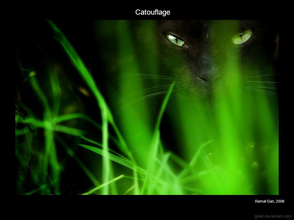 Catouflage Ramat Gan, 2006 gilad.deviantart.com