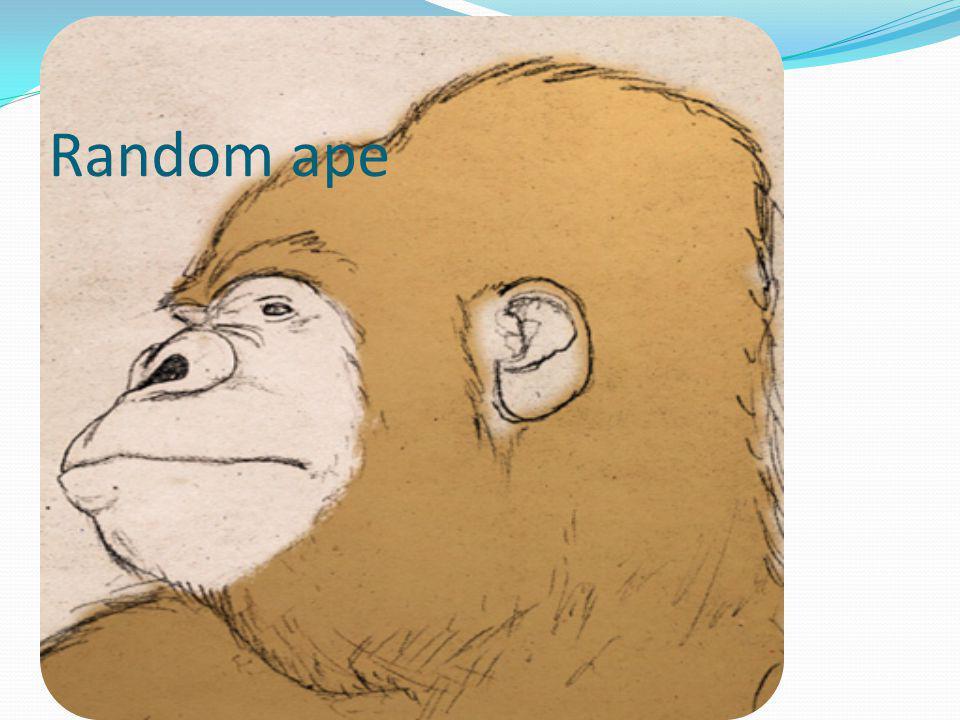 Random ape