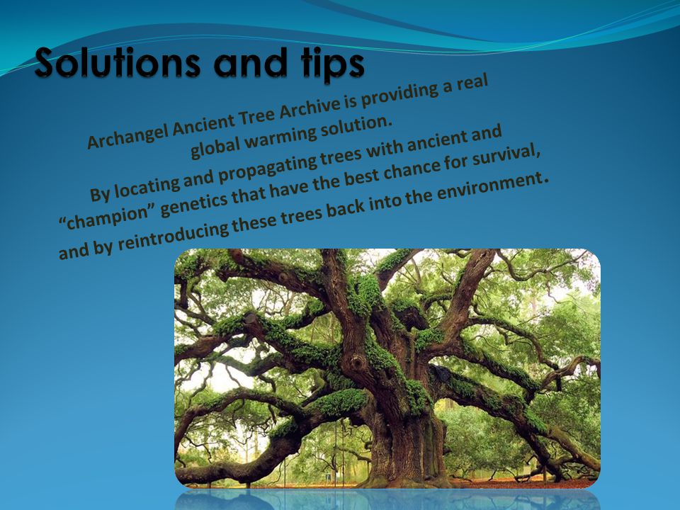 Solutions and tips Archangel Ancient Tree Archive is providing a real global warming solution.