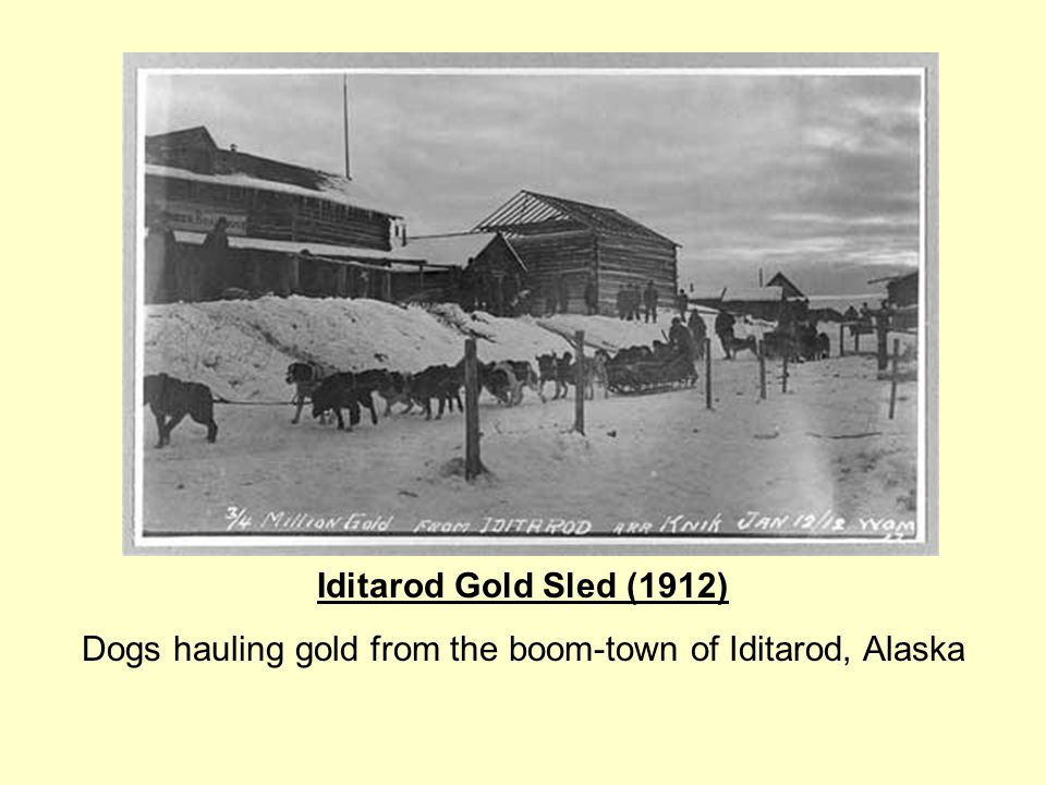 Dogs hauling gold from the boom-town of Iditarod, Alaska