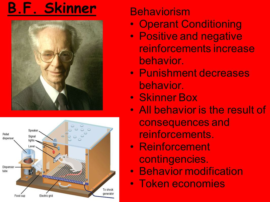 a study on skinners behaviorist theories Behaviorist theory on language acquisition bf skinner, and aw staats behaviorism was advanced in america as a new approach to psychology in the early.
