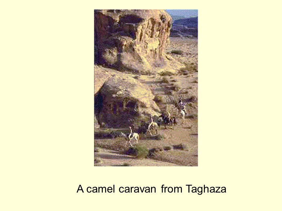 A camel caravan from Taghaza