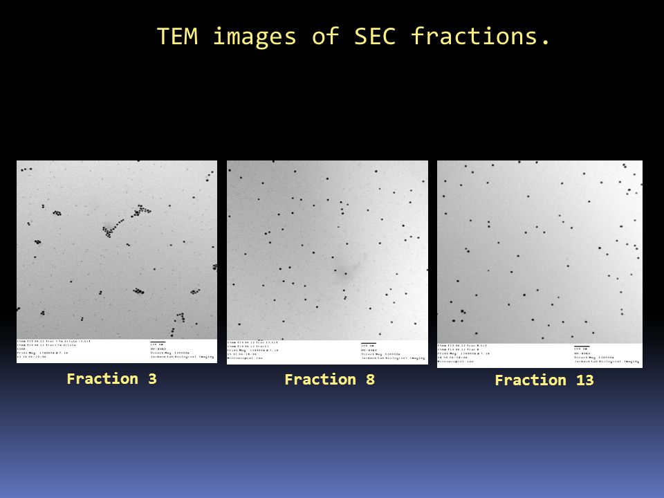 TEM images of SEC fractions.