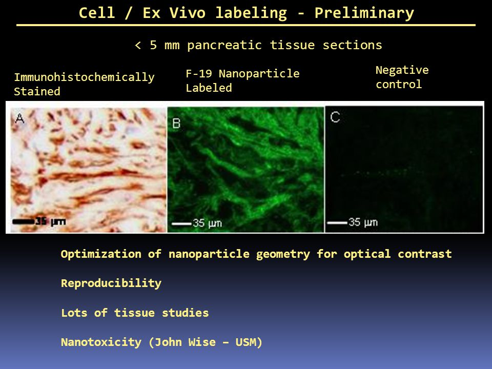 Cell / Ex Vivo labeling - Preliminary