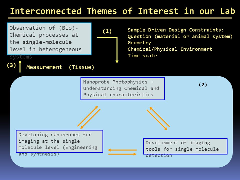 Interconnected Themes of Interest in our Lab