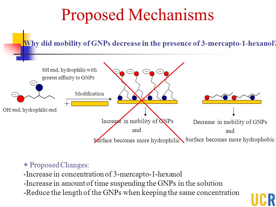 Proposed Mechanisms Why did mobility of GNPs decrease in the presence of 3-mercapto-1-hexanol SH end, hydrophilic with.