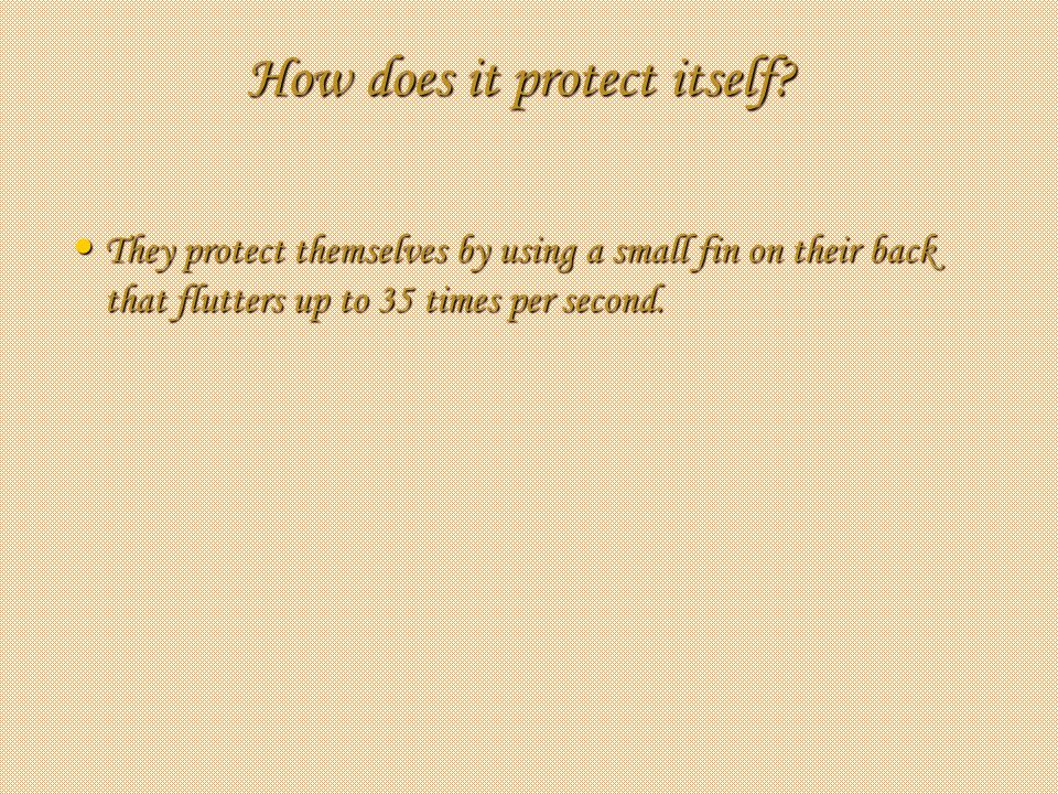 How does it protect itself