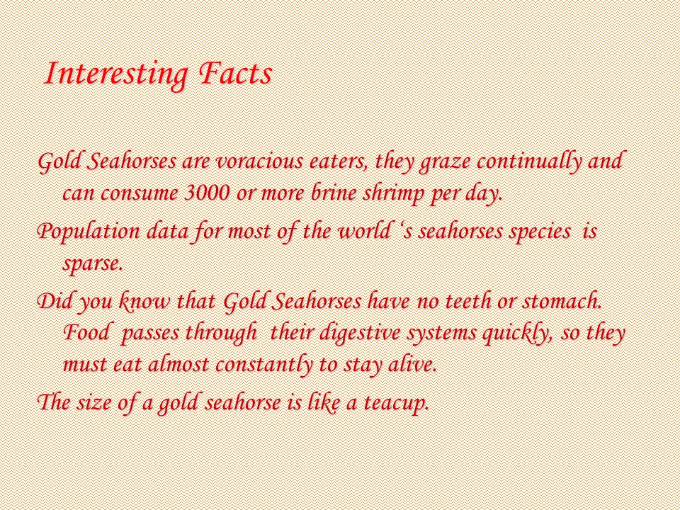 Interesting Facts Gold Seahorses are voracious eaters, they graze continually and can consume 3000 or more brine shrimp per day.