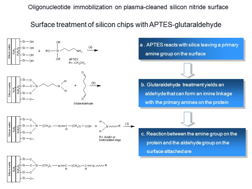 Surface treatment of silicon chips with APTES-glutaraldehyde