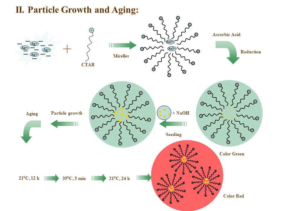 II. Particle Growth and Aging: