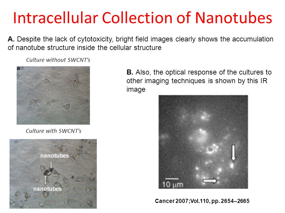 Intracellular Collection of Nanotubes
