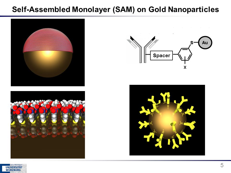 Self-Assembled Monolayer (SAM) on Gold Nanoparticles