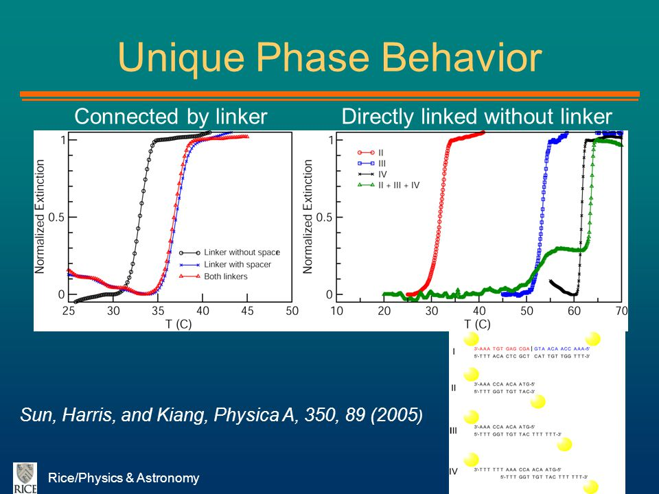 Unique Phase Behavior Connected by linker