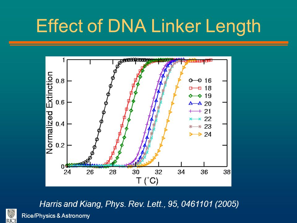 Effect of DNA Linker Length