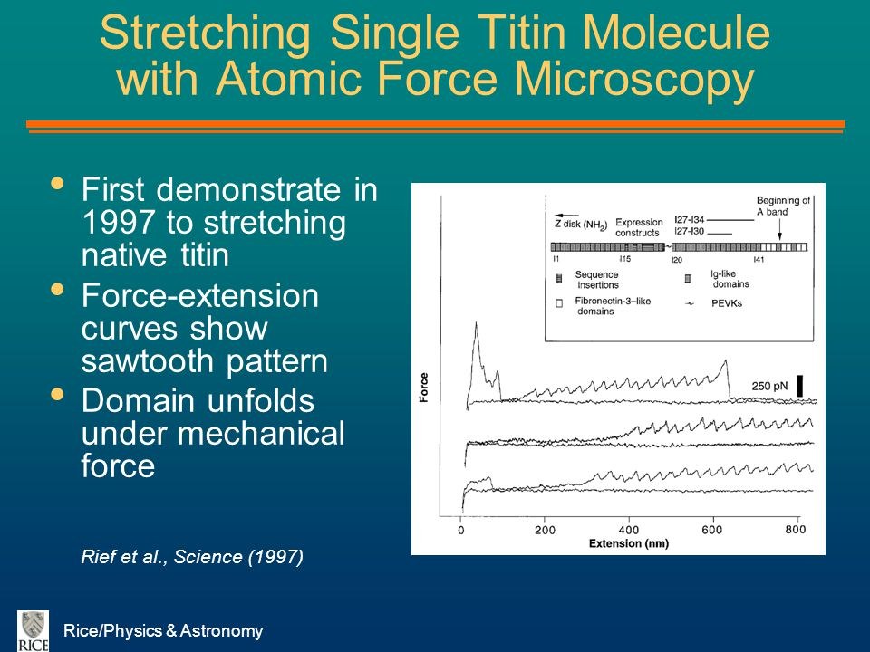 Stretching Single Titin Molecule with Atomic Force Microscopy