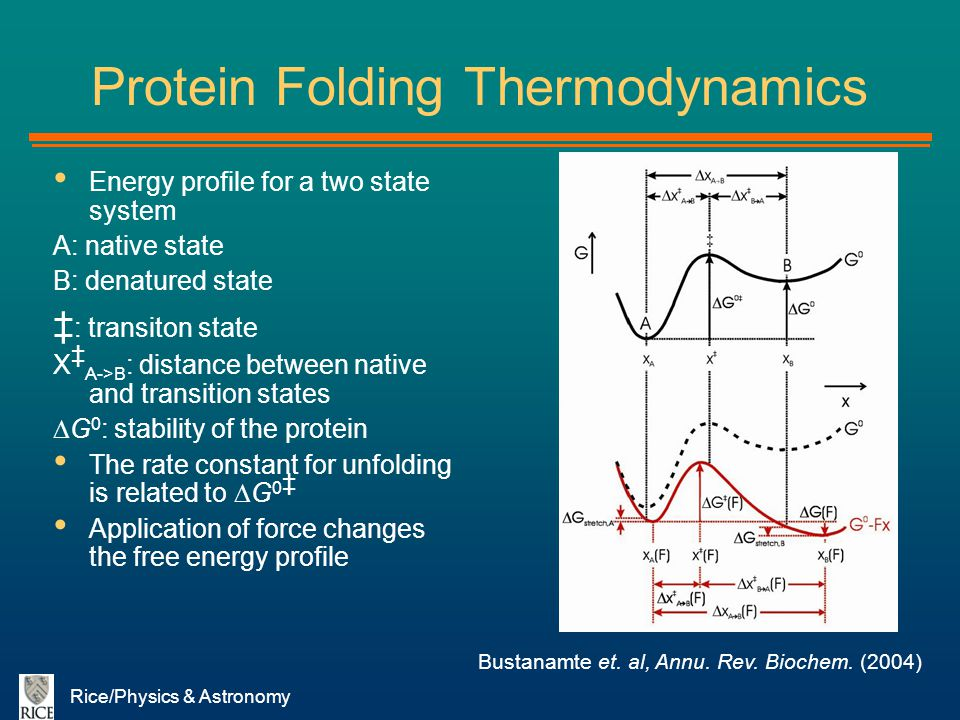 Protein Folding Thermodynamics