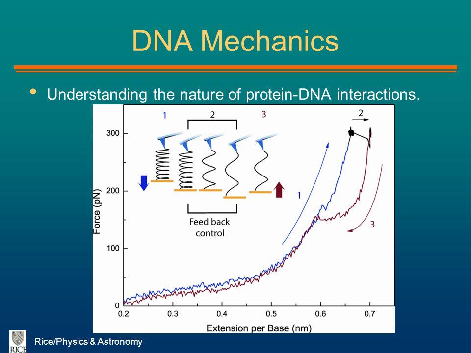 DNA Mechanics Understanding the nature of protein-DNA interactions.