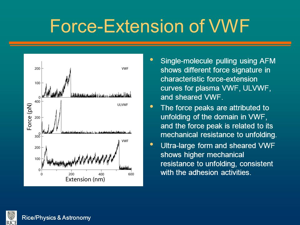 Force-Extension of VWF