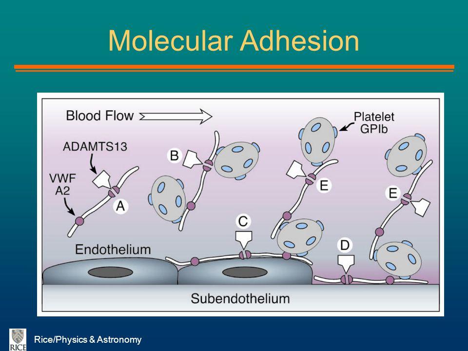 Molecular Adhesion Rice/Physics & Astronomy