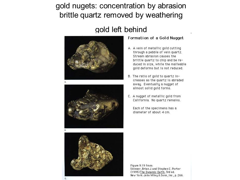 gold nugets: concentration by abrasion brittle quartz removed by weathering gold left behind