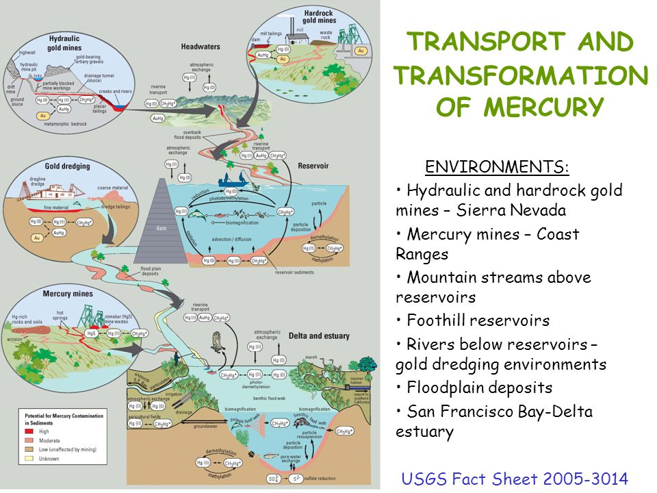 TRANSPORT AND TRANSFORMATION OF MERCURY